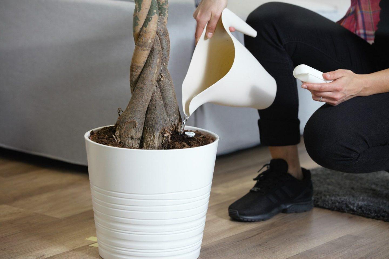 Hilfe, meine Pflanzen gehen ein! Växt Gießhilfe